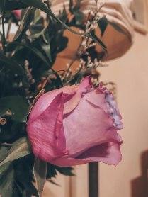 IMG_0730_Fotor
